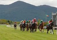 Killarney Odds