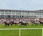 Lingfield Odds