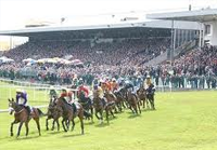 Punchestown Odds