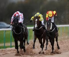 Weatherbys Champion Bumper Odds